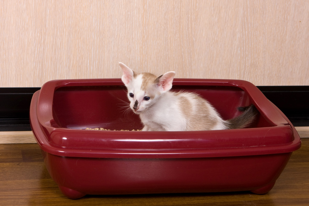 How to train a kitten to the tray